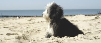 Hunde in Zoutelande